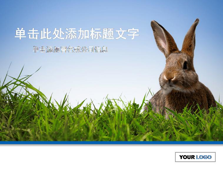 可爱兔子=兔子_可爱; 可爱兔子ppt背景 兔子ppt背景图片 兔子ppt背景