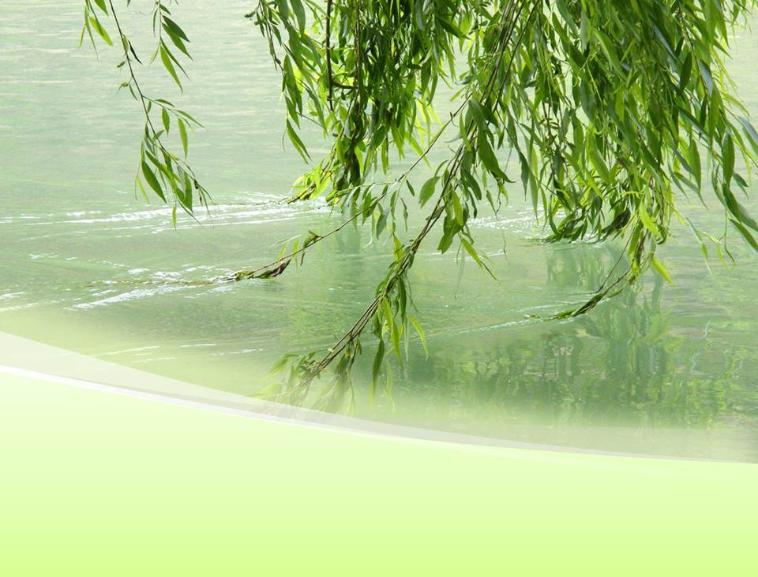 春天柳树的风景