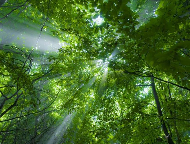 阳光透射过茂密的森林自然美景背景模板免费下载