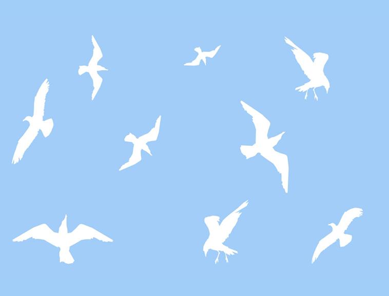 蓝天白鸽动物ppt模板_乐乐简笔画