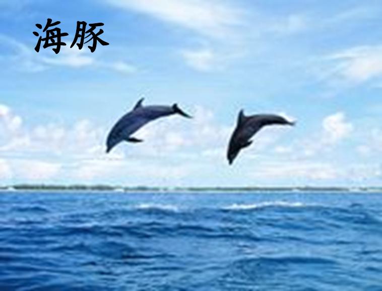 海豚 支持格式:ppt wpp 文件大小:                       140kb
