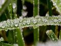 冰晶幻梦冬天冰雪植物ppt模板免费下载 70387 wps在线模板
