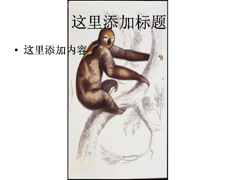 手绘树猴图片