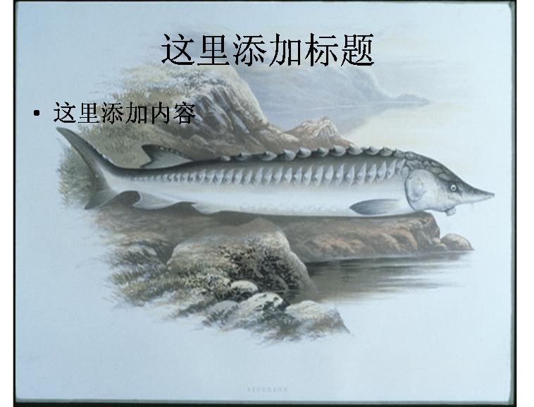 手绘海鱼图片