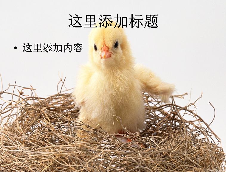 ppt小动物模板免费下载