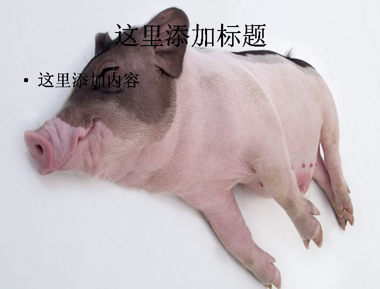ppt背景可爱的非猪流图片(14)模板免费下载