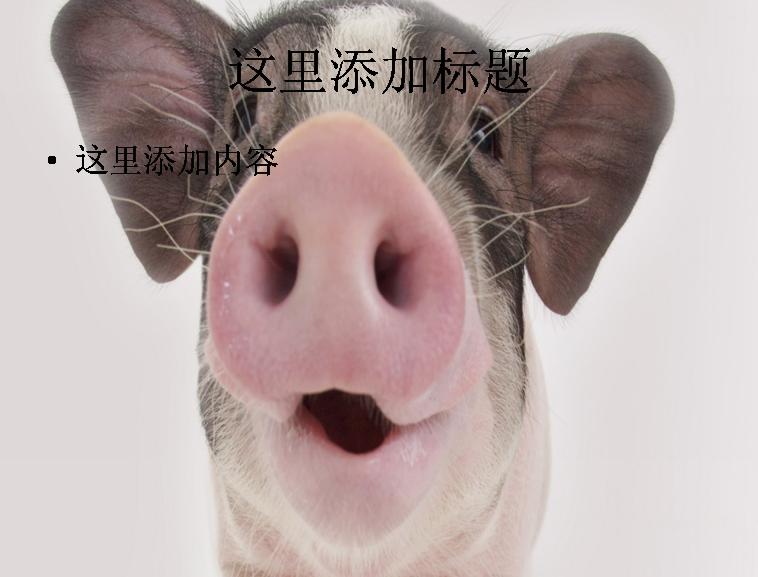 ppt背景可爱的非猪流图片(4)模板免费下载