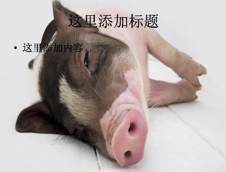 ppt背景可爱的非猪流图片(5)模板免费下载