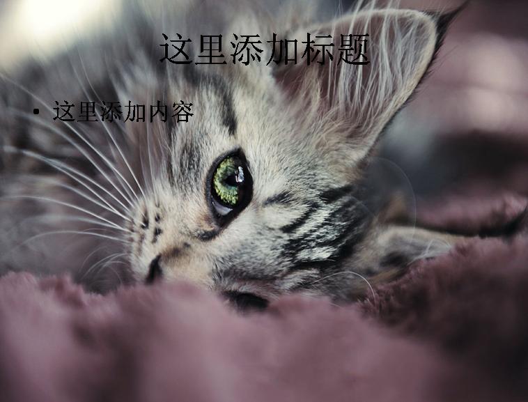 可爱小猫咪卖萌精选高清(5)模板免费下载