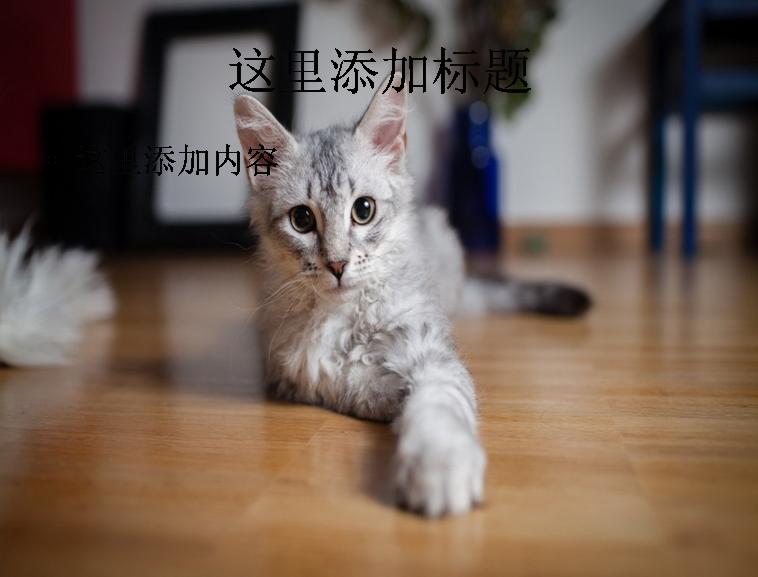 可爱小猫咪卖萌精选高清(8)模板免费下载