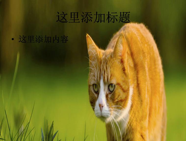 大黄猫ppt背景模板免费下载