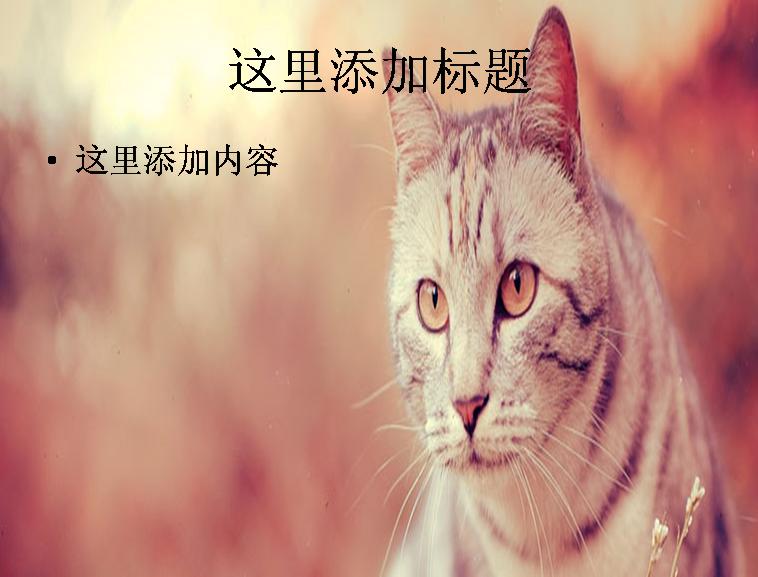 漂亮的猫ppt图片模板免费下载