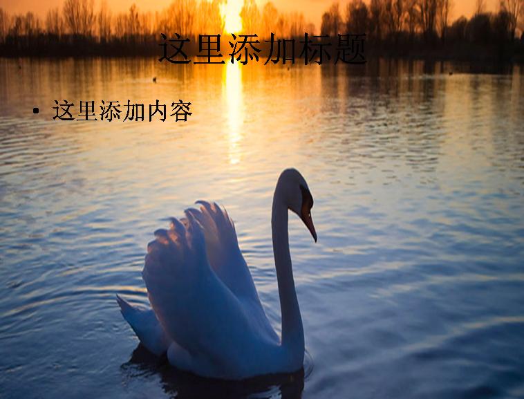 美丽的天鹅湖ppt图片模板免费下载_84528- wps在线模板