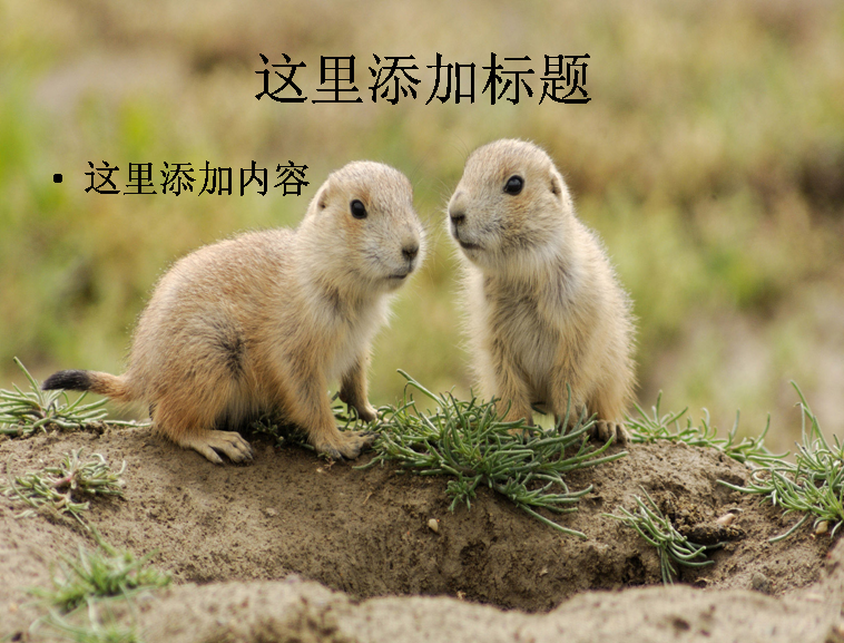 可爱小动物合集(6) 支持格式:ppt wpp 文件大小: