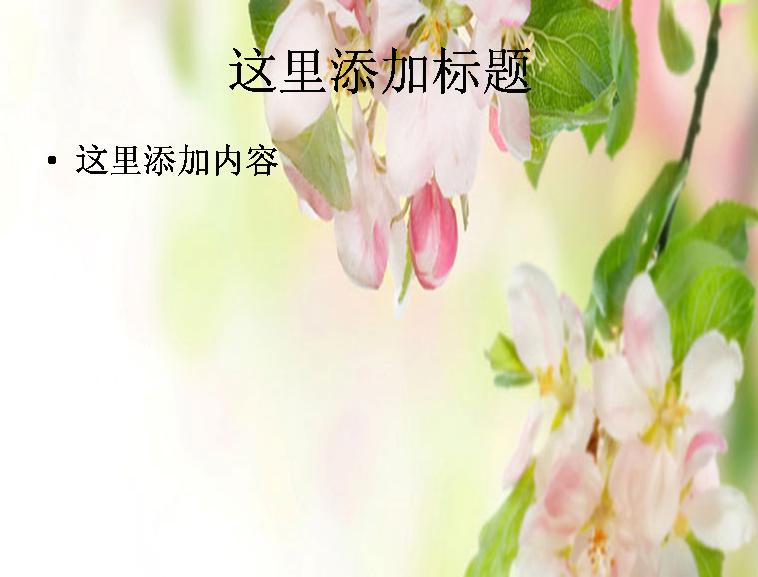 粉色花朵电脑背景