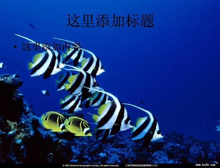 海底世界(2)