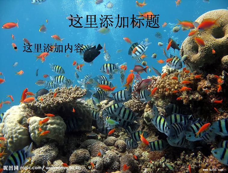 海底世界(6)