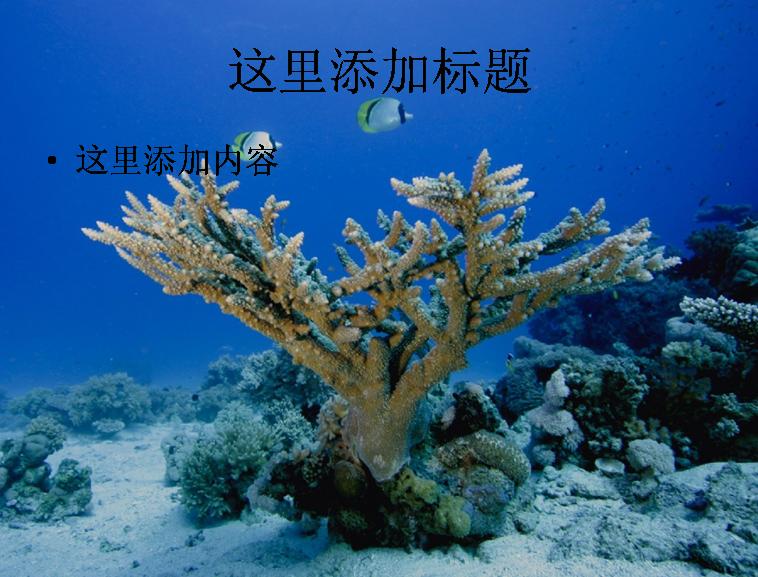 海底世界生物(7)模板免费下载