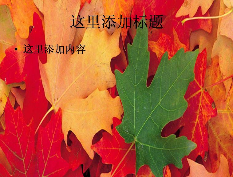 秋天枫叶飘落图片ppt