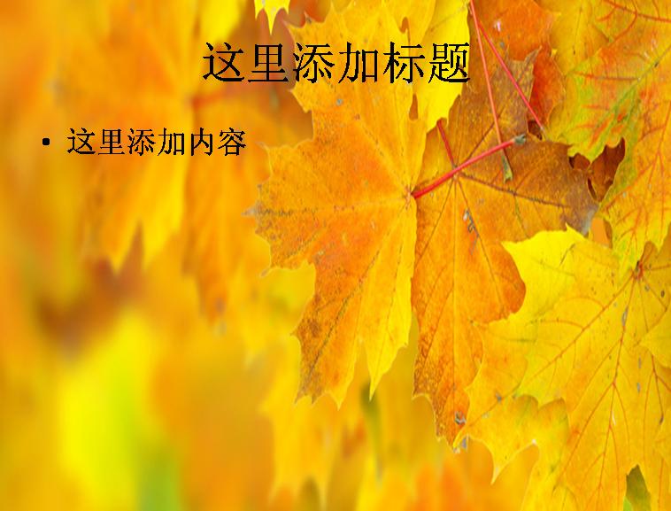 秋天枫树叶子图片 宽屏ppt模板免费下载