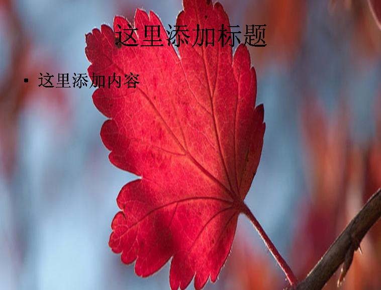 秋天红树叶ppt背景图片
