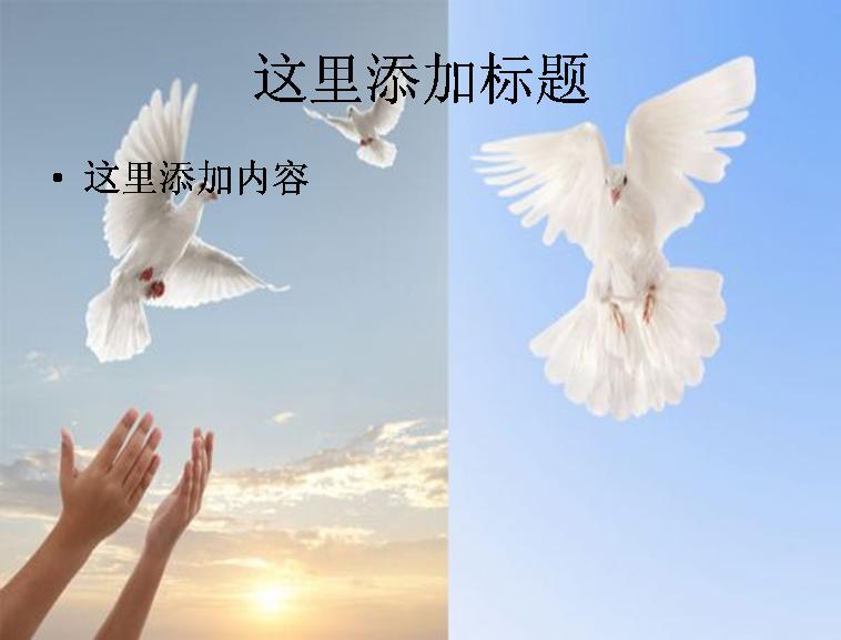 2款鸽子主题高清图片ppt动物素材模板免费下载
