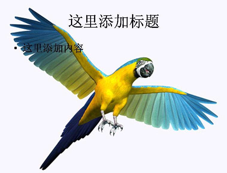 3d鹦鹉图片ppt素材动物素材模板免费下载