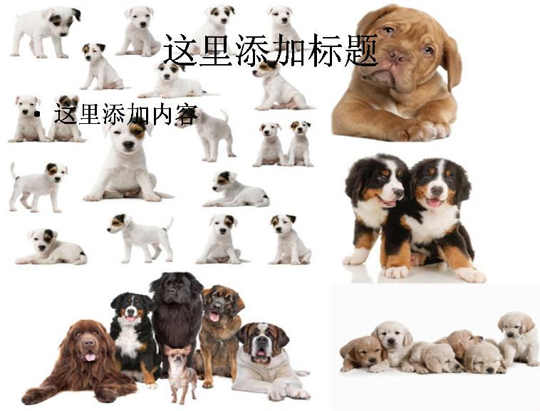 一群狗狗高清图片ppt模板免费下载