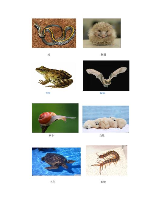 冬眠动物图片模板免费下载