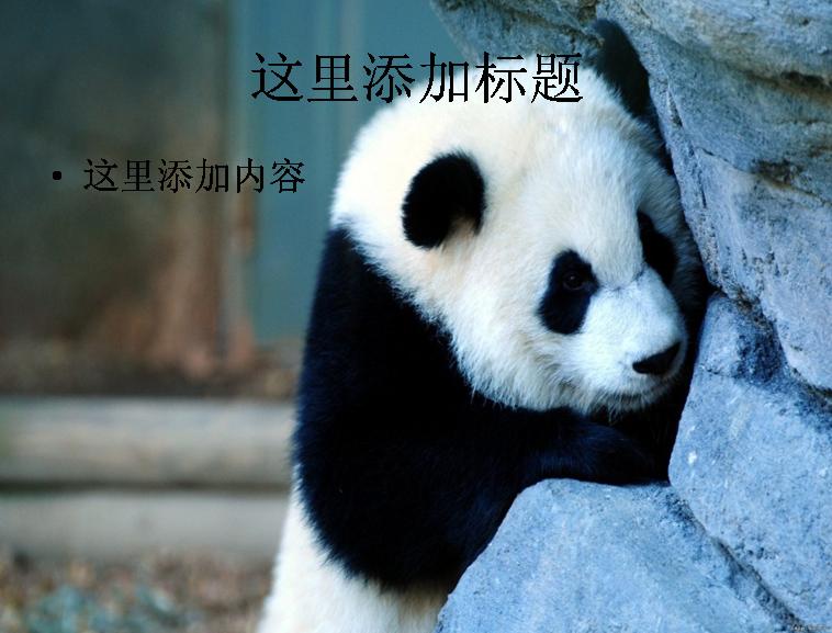 壁纸 大熊猫 动物 758_577