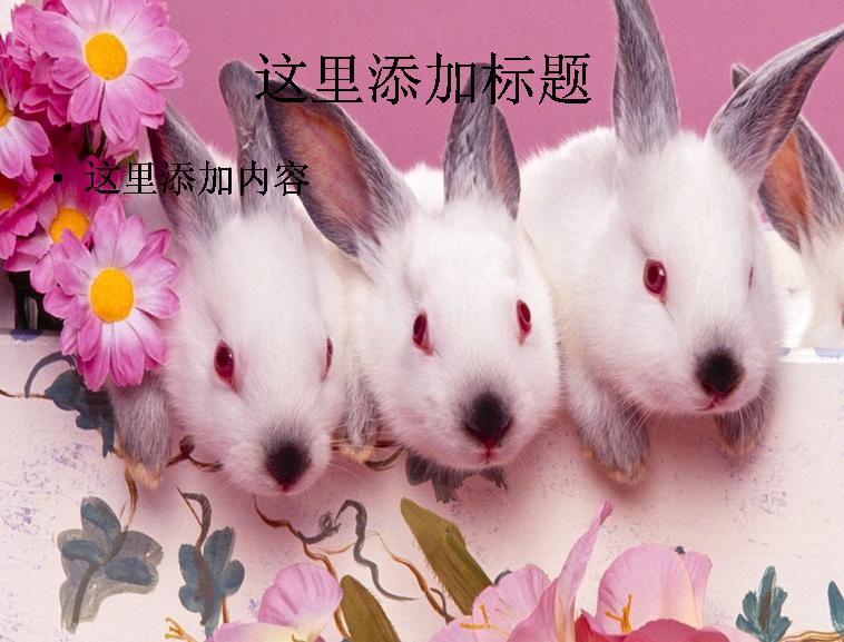 可爱小兔子ppt(10_30)模板免费下载