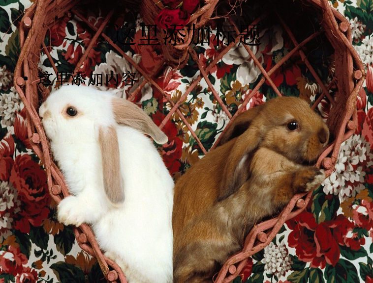可爱小兔子ppt(29_30)模板免费下载