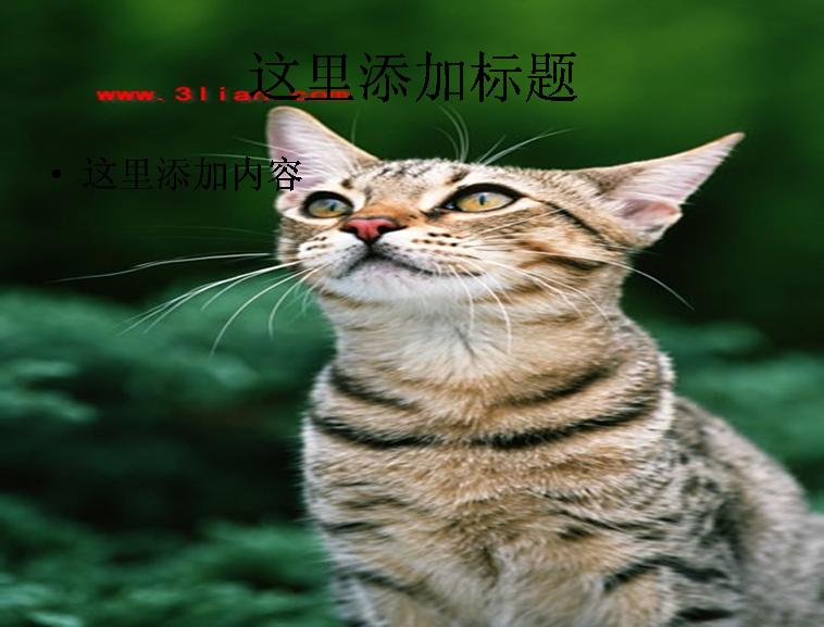 可爱小猫图片模板免费下载