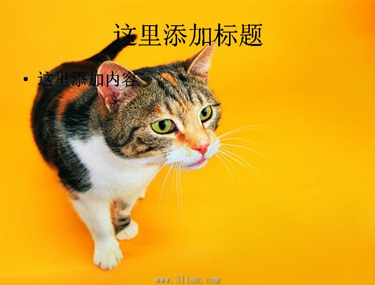 可爱小花猫图片模板免费下载