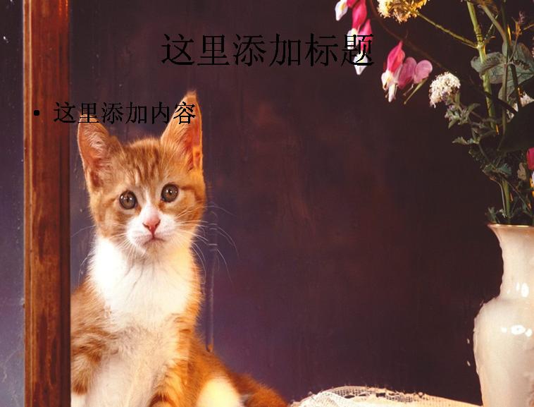 ppt背影图片可爱猫咪