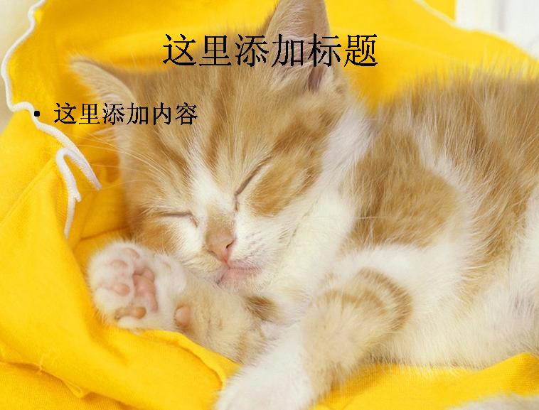 可爱小黄猫ppt(4_11)模板免费下载