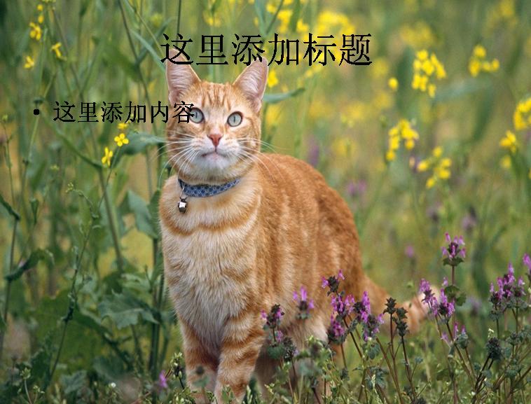 可爱小黄猫ppt(7_11)模板免费下载