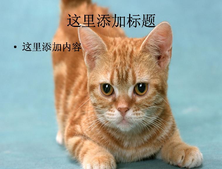 ppt图片猫咪可爱gif