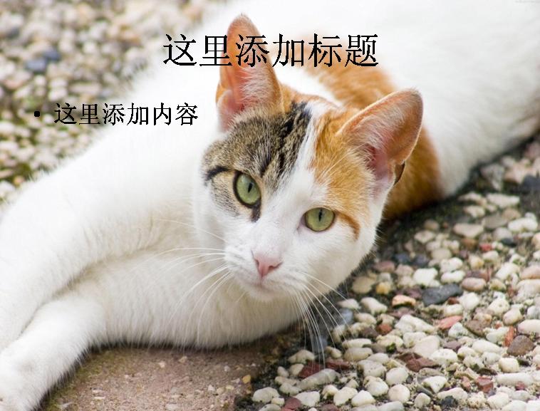 可爱猫咪ppt(17_17)模板免费下载_100416- wps在线模板