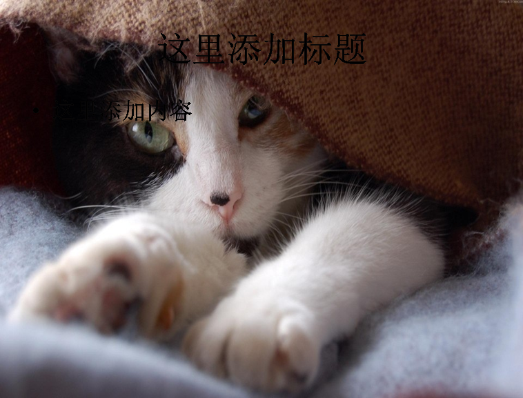 可爱猫咪ppt(3_17)模板免费下载