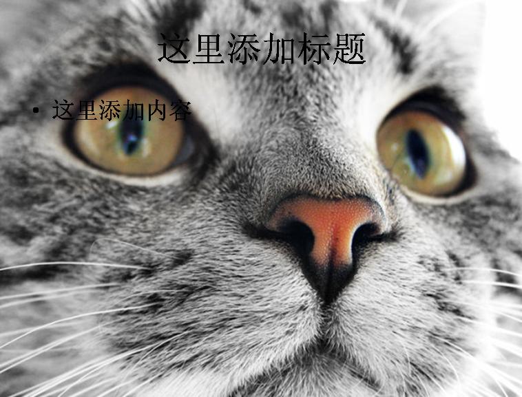 在线模板 可爱猫咪高清图片ppt   1/