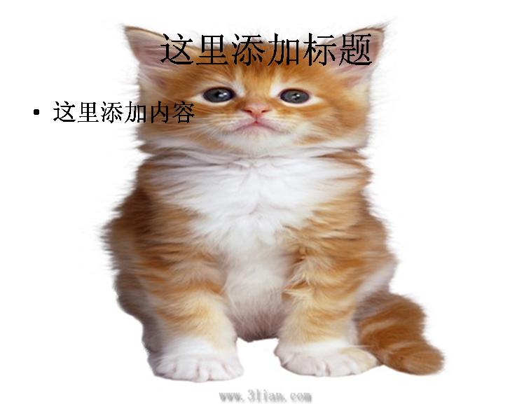 可爱猫图片ppt模板免费下载_100429- wps在线模板