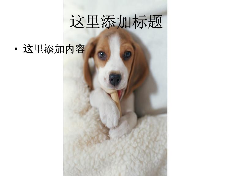 可爱的宠物狗图片ppt模板免费下载_100451- wps在线