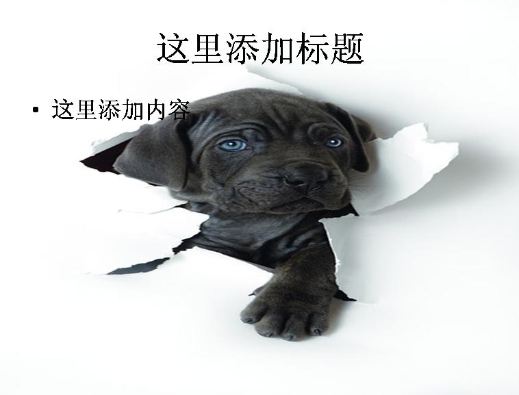 可爱的小狗ppt图片ppt素材-3动物素材模板免费下载