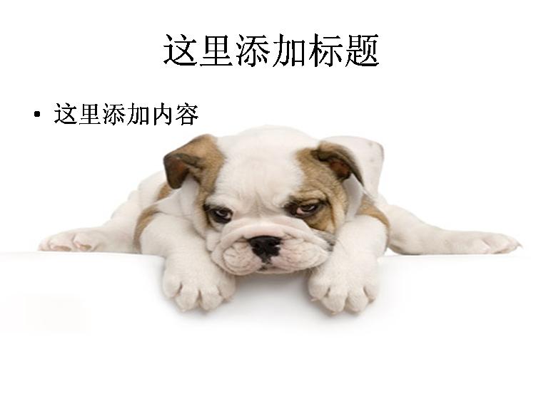 可爱的小狗ppt图片ppt素材-9动物素材