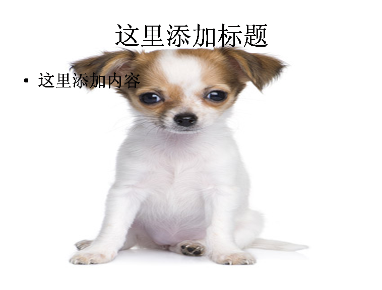 可爱的小狗写真图片素材-5动物素材模板免费下载