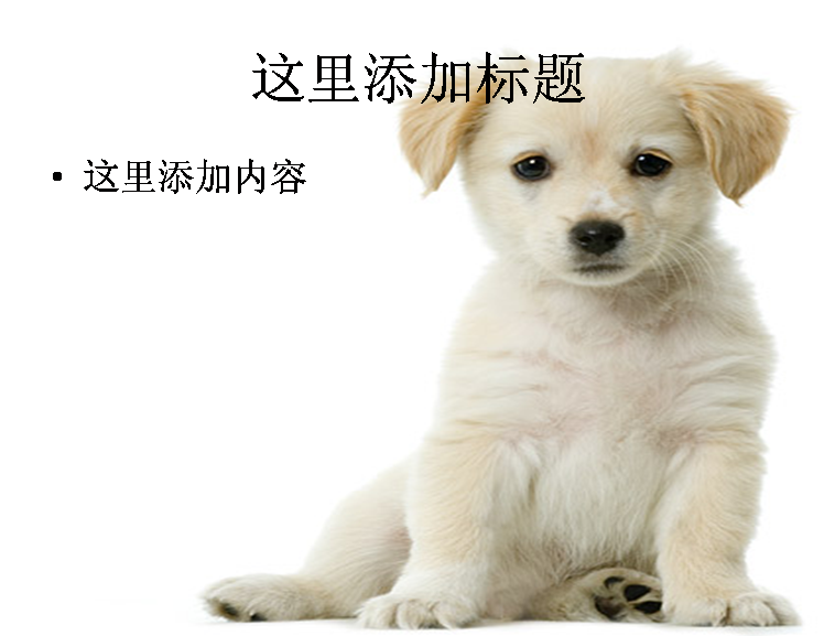 ppt图片素材动态 狗狗