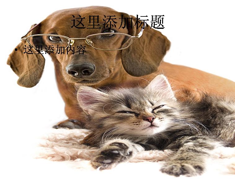 可爱的猫和狗图片素材-模板免费下载