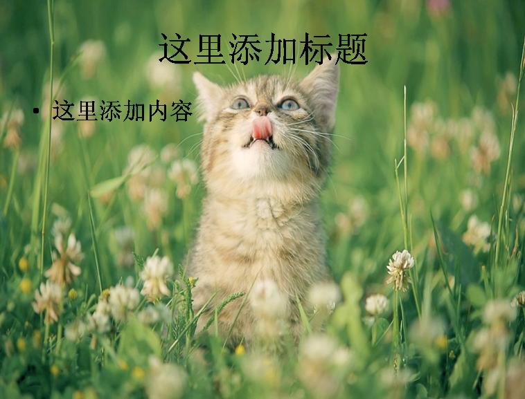 可爱的猫咪ppt(3_10)