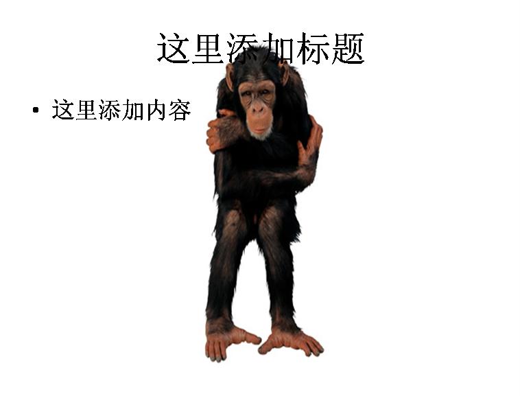可爱的猴子图片